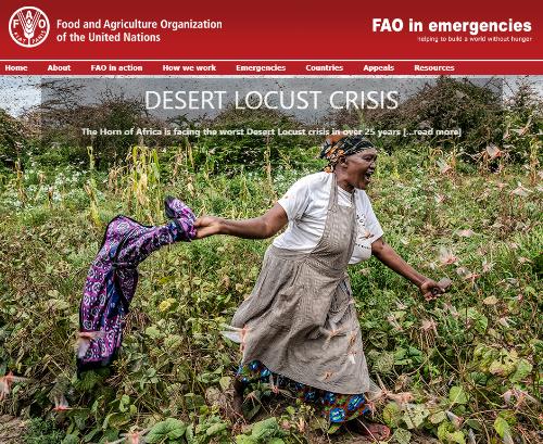 FAO crisis